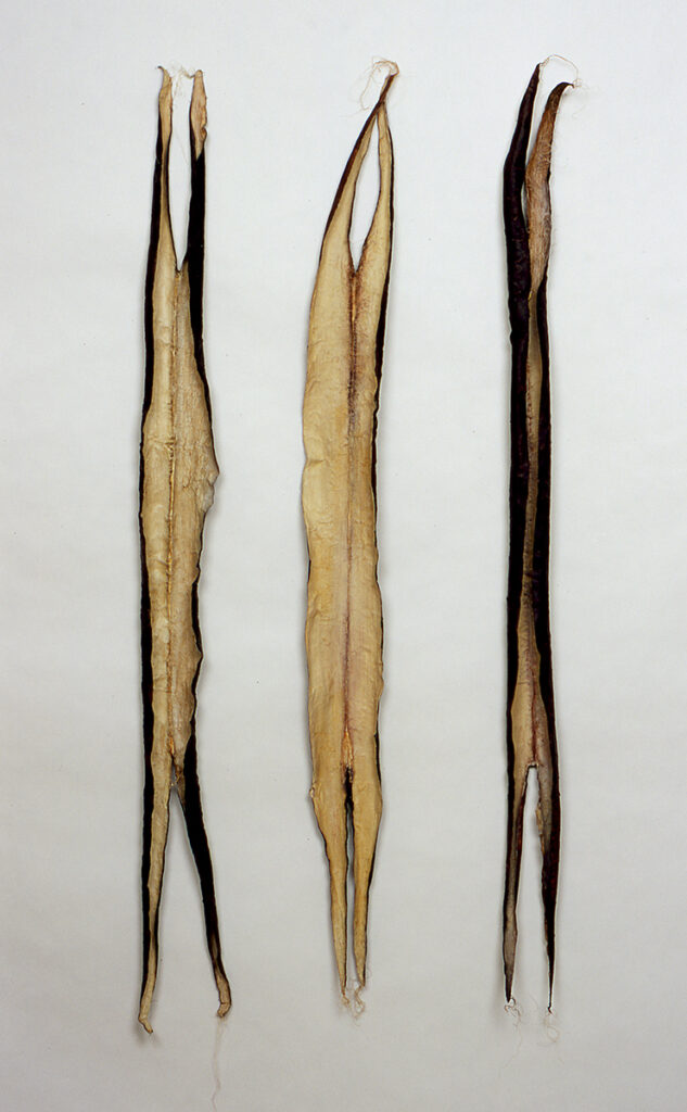 Remains I #4,5,6: paper, rice paste, thread, pigments